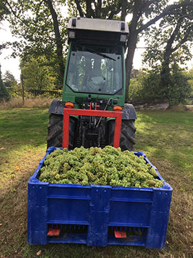 2019 Harvest Report – The year of two halves
